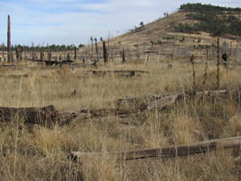 Grass grows in an area of the Coconino National Forest burned in a 1996 wildfire.