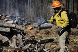 Bureau of Indian Affairs forester technician Butch Gregg, in 2011 file photo, lights wood piles as part of forest-management on the Fort Apache Indian Reservation. Such thinning efforts helped stop the Wallow fire at the reservation's boundary.