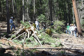 Apache County crews thin the forest on the western side of Greer by cutting down small trees and low-hanging limbs and tossing them into a pile that later will be burned by the Forest Service.