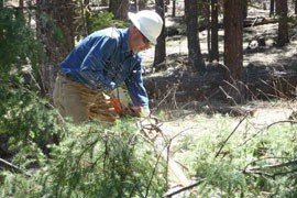 Apache County crews began clearing out a 75-acre swath of forest outside of Greer on May 23.