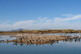 Waterfowl stop at Cibola National Wildlife Refuge in La Paz County. A new poll claims that most Western voters would oppose proposals to shift federal lands, like Cibola, to state governments.