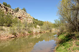 Crews have worked for years to remove tamarisks from along the Verde River near Paulden to help preserve native species and prevent the thirsty invaders from harming the watershed.