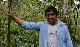 Saramanco Gutierrez stands among his coffee plants near the village of Chenalhó in Chiapas, Mexico. Over the next two years rust fungus is expected to decimate the crops of poor, indigenous organic coffee farmers like Gutierrez.