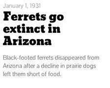 Ferrets timeline