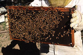 9-10 frames of bees can fit into bee supers, or artificial hives.
