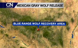 The fight for the endangered Mexican gray wolf has been an uphill battle for both Arizona and New Mexico. Cronkite News Reporter Ryan Hill traveled to New Mexico to see how this endangered animal raises economic concerns.