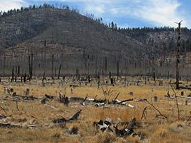 This area of the Coconino National Forest burned in 1996. An environmental impact statement that clears the way for a plan to thin nearly 600,000 acres in the Coconino and Kaibab national forests, a move that officials say will help prevent catastrophic wildfires.