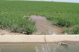 While flood irrigation, being used in this Maricopa alfalfa field, is prevalent in Arizona agriculture, many have been shifting fields to more efficient systems including sprinklers and drip irrigation.