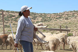 Generations of Marie Peyketewa's family have raised sheep near the Navajo Nation community of Gap. She says a development proposed on the reservation at the Grand Canyon the project hasn't been properly explained to the people and that Navajo Nation leaders have refused to meet with her.
