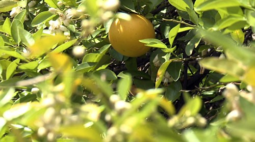 Cronkite News reporters look into a new bill that could change your retirement plan, while also explaining why some valley oranges are covered in fungus and how that's hurting local food banks.